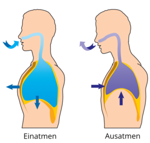 Menschliche Atemmuskulatur