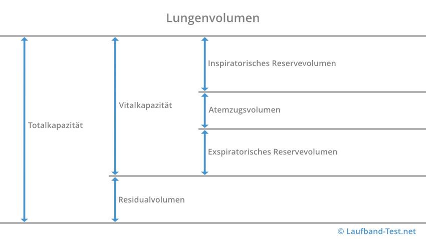 Zusammensetzung des Lungenvolumens